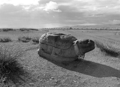 Schildkröte vor Erdene Zuu