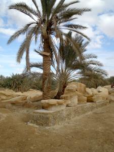 Umm Ubaydah, Bruchstuecke der Bauplastik (Palmsäulen)