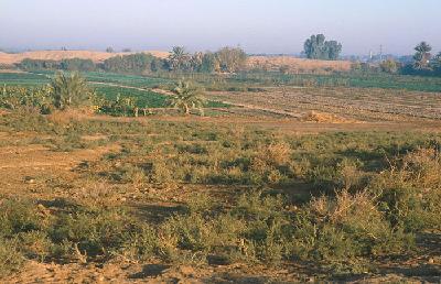 Die Siedlungshügel von Sippar liegen heute in landwirtschaftlich genutztem Gebiet