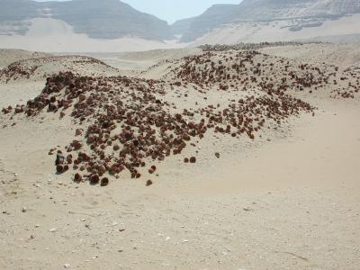 Deponierung von Qaab-Schälchen am Grab des Chasechemui