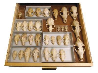 Labor für Archäozoologie
